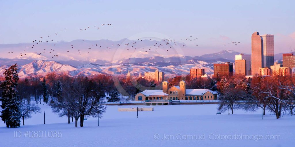 Photo of geese flying over Denver skyline in winter